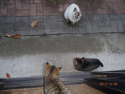 2013-12-08 ネコ3代:2号、クロトラ、ヒメトラ 001