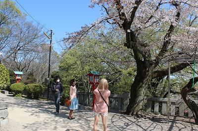 2014-04-01 織姫山の桜と蕎遊庵 010